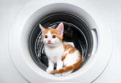 Waschmaschine mit Tierhaarentfernung